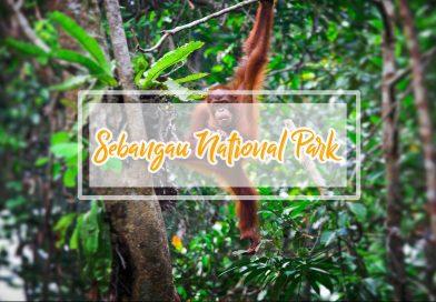 Paket Open Trip Taman Nasional Sebangau dan Desa Dayak 3D2N
