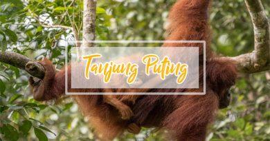 Open Trip Tanjung Puting 3 Hari 2 Malam